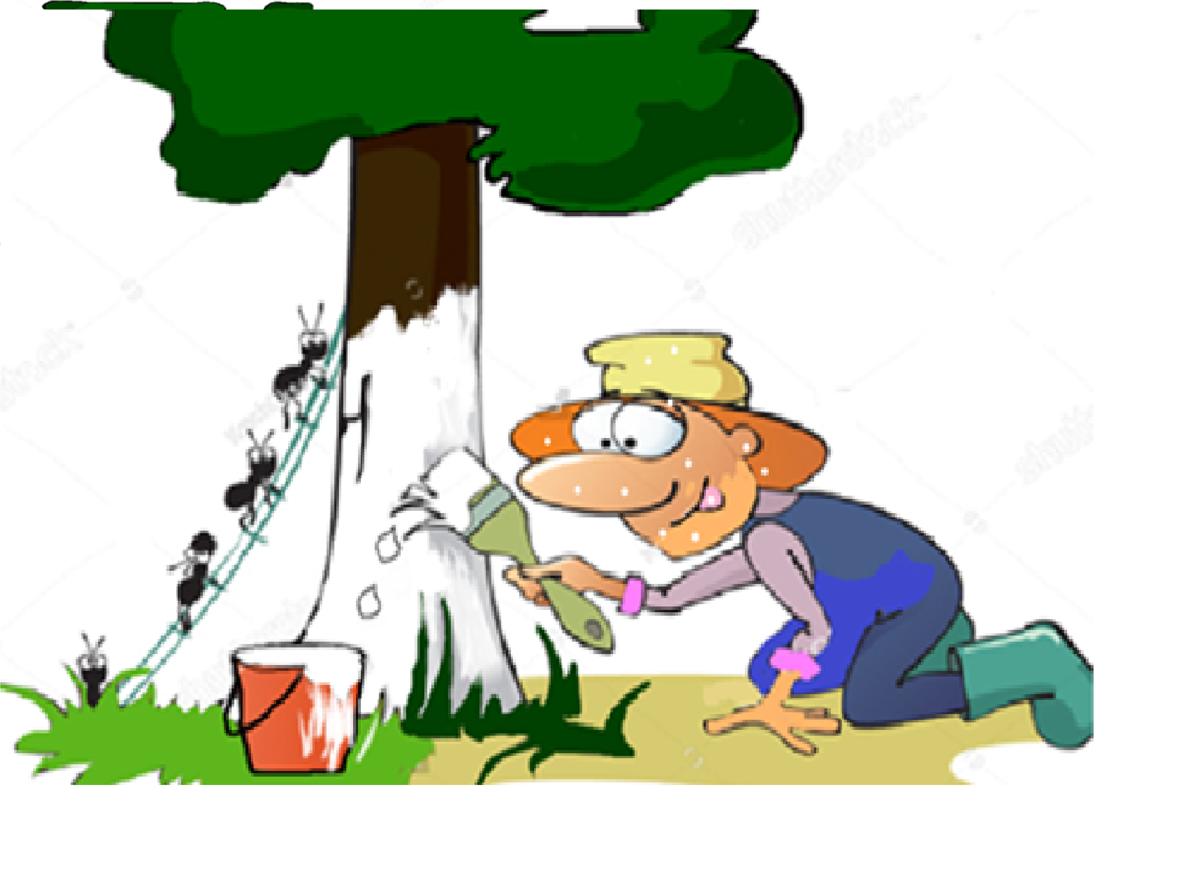 koku stumbru kaļķošanai